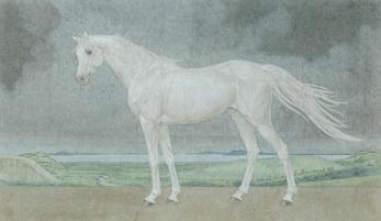 〈灰色天空下的白马 | Weißes Pferd am grauen Himmel, 2015〉 魏为 Wei WEI, 纸本国画 Tuschmalerei, 56x96cm